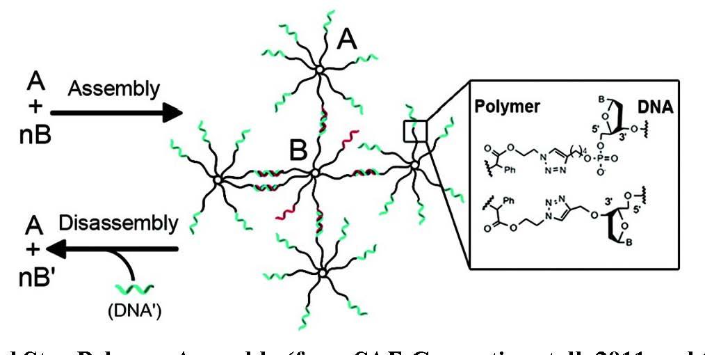 Functional Biomaterials - Matyjaszewski Polymer Group