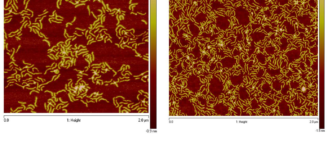 Densely Grafted Linear Copolymers Matyjaszewski Polymer