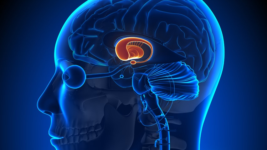 Parkinsons Disease Progression >> BrainHub Scientists Visualize Critical Part of Basal Ganglia Pathways - News - Carnegie Mellon ...