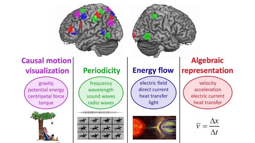 Brain Representations Of Social >> Scientists Discover How The Brain Repurposes Itself To Learn
