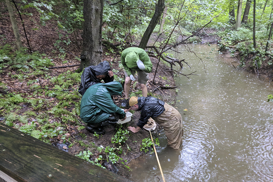 A photo of volunteers collecting aquatic insects.