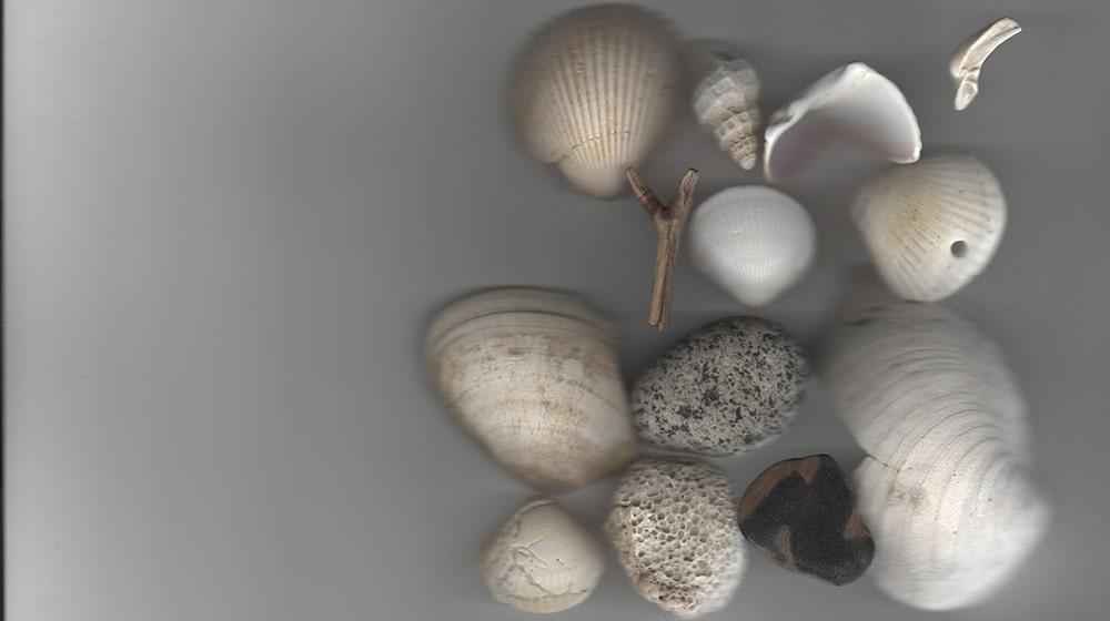 A photo of sea shells