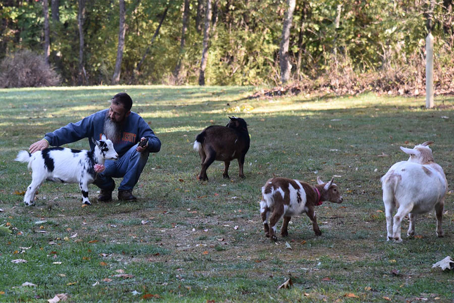 Travaglia with his goats
